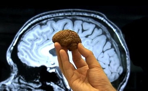 Andy Milns eats chocolate replica of his brain, London, Britain - 16 May 2012